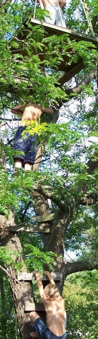 Stelle Tree Climbers